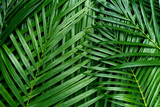 Palm leaves, greenery background