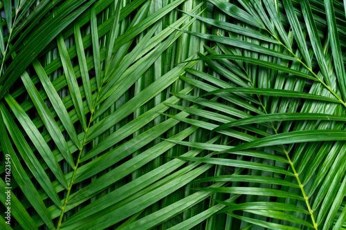 Liście palmowe, tło zieleni