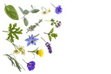 various fresh herbsand medicinal plants rosemary, ,thyme and peppermint leaves with entral copy space on white background. - 171642196