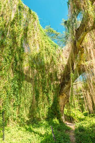 Foto op Canvas Havana Cuba, Havana, Almendares park in Great Metropolitan park