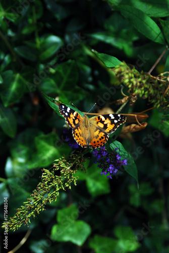 Fotobehang Vlinder Butterfly; yellow black