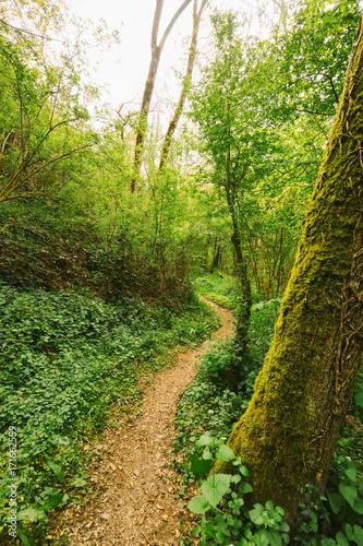 Papiers peints Route dans la forêt Un chemin au milieu de la forêt