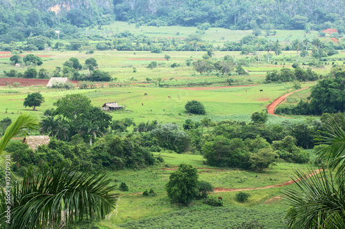 Cuba. Vinales. The valley where fine tobacco grows Poster