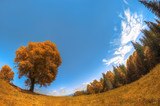 lonely yellow tree in a mountainous area against a deep blue sky with clouds