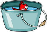 Little red fish in bucket