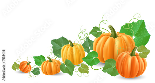 Pumpkin corner decoration, with leaves tendril and different size pumpkin. Realistic vector illustration for harvest, Halloween and autumn horizontal banner