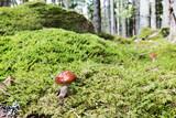 Close up on fungus - 171797181