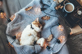 Lazy cat sleeping on woolen sweater - 171800774