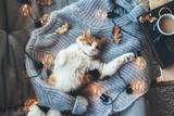 Lazy cat sleeping on woolen sweater