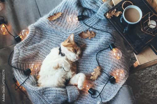 Obraz na płótnie Lazy cat sleeping on woolen sweater