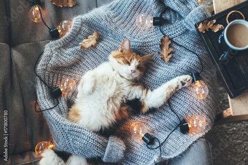 Lazy cat sleeping on woolen sweater - 171800780