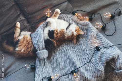 Lazy cat sleeping on woolen sweater Poster
