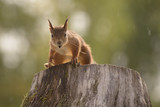 squirrel standing on a tree trunk - 171837969