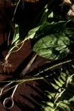 vegetation - 171838783