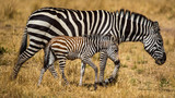 Zebra Mother and Child