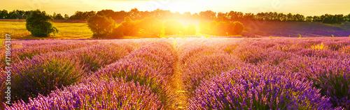 Poster Oranje eclat Lavender field at sunset