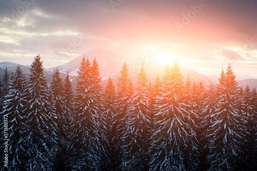 Fotobehang Winter Fantastic landscape with snowy trees