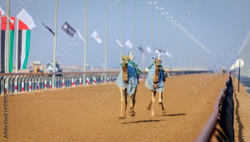 Fotobehang Dubai Camel racing in Dubai