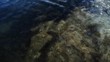 Submerged Ocean Rock stock footage. Rock submerged in the Sea top down view background. - 171883713