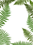 Fern Leaf Vector Background Illustration - 171899972