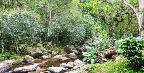 Foto op Plexiglas Rio de Janeiro Rio e floresta.
