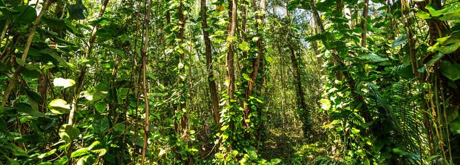 Fundo verde com floresta.