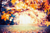 Autumn background with fall foliage and sunbeam at park or garden lawn - 171925730