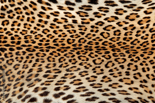 Close-up view of the skin of a leopard (Panthera pardus). Poster