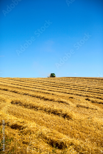 Foto op Plexiglas Honing Moisson du blé en été