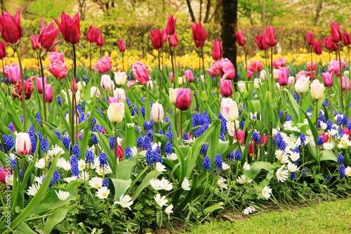Fotobehang Tulpen Bunches of Beauty