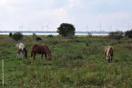 Horses in the grass field