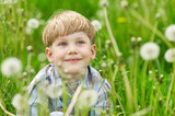 Young blond boy sitting on a meadow with dandelions