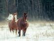 horses herd in winter - 171987972
