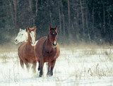 horses herd in winter - 171987972
