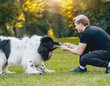 Newfoundland dog plays with man and woman in the park