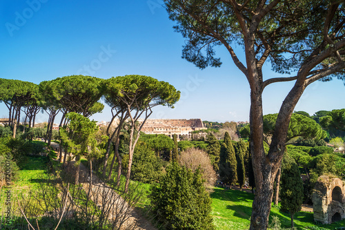 Foto op Aluminium Rome View of Colosseum from Palatine Hill in Rome, Italy