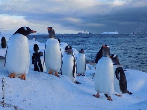 Fotobehang Pinguin antartica paisajes