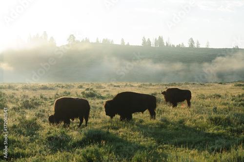 Fotobehang Bison Bison Silhouttes at Dawn