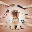 Yorkshire Terrier puppy surrounded by hands with groomer tools on brown background