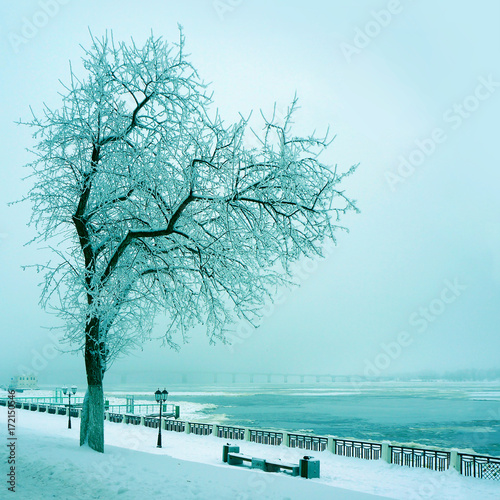 Spoed canvasdoek 2cm dik Lichtblauw Winter nature, lonely tree on coast of river