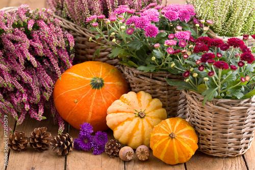 Herbstblumen und Kürbisse - 172151579