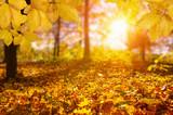 Autumn leaves on the sun - 172165116