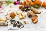 Flower bulbs and garden accessories for planting in the ground.