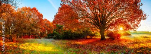 Leinwandbild Motiv Landscape in autumn with big oak tree