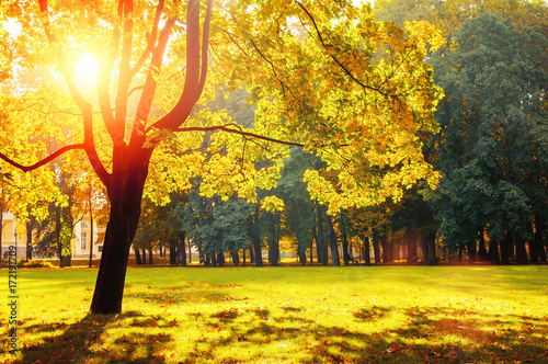 Fotobehang Geel Autumn colorful landscape in sunny autumn landscape park lit by sunlight. Autumn park in bright sunlight
