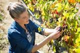 Female vintner examining grapes in vineyard - 172192530