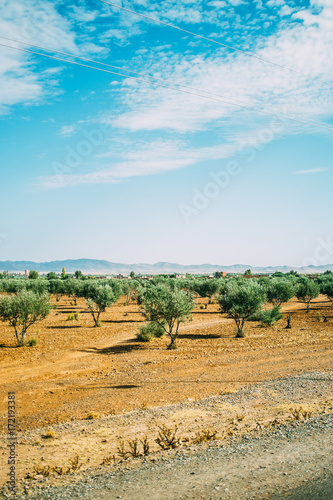 Foto op Canvas Marokko Moroccan Landscape With Olive Trees
