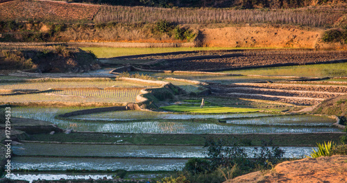 Foto op Plexiglas Diepbruine Madagascar, Africa, agricultural landscape with rice fields