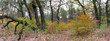 panoramic image of the autumn forest