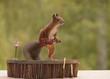 squirrel climbing on a violin